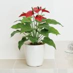 光触媒人工観葉植物テーブルタイプ フレッシュアンスリュームM