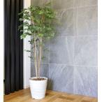 Yahoo!光の楽園ショップ モントブレッテ光触媒人工観葉植物 マウンテンアッシュ1.8m、新商品