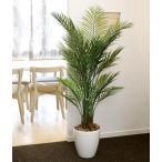 Yahoo!光の楽園ショップ モントブレッテガーデニング用、人工観葉植物 アレカパーム1.5m、新商品