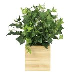 Yahoo!光の楽園ショップ モントブレッテ光触媒人工観葉植物 ウッドボックスK (高さ50cm)(ボックスだけのサイズ:幅20cm、奥行20cm、高さ20cm)、新商品