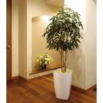 Yahoo!光の楽園ショップ モントブレッテ光触媒人工観葉植物 光の楽園 アーバンパキラ 1.8m、新商品