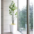 Yahoo!光の楽園ショップ モントブレッテ光触媒人工観葉植物 光の楽園 アーバンブランチツリー1.8m、新商品