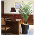 Yahoo!光の楽園ショップ モントブレッテ光触媒人工観葉植物 光の楽園 アーバンアレカパーム1.7m、新商品