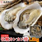 かき カキ 牡蠣 カンカン焼き 殻付きマガキたっぷり1.5kg! 冷凍便 BBQ バーベキュー