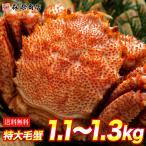 超特大 毛ガニ 1尾 約1.1kg  ロシア産 冷凍便  ( 毛蟹 / 毛がに ) お歳暮