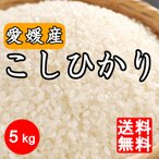 新米 送料無料 令和2年産 愛媛県産 コシヒカリ 5kg こしひかり 5キロ