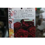 バラ苗(バラ大苗) 京成バラ園芸(京成バラ園) グレーフィン・ディアナ5号超ロングポット