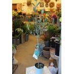 オリーブの木(オリーブ苗木) エンペルトレ4号ポット