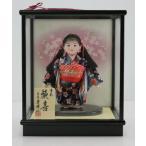 4号市松人形さくらNo.12木製枠ガラスケース扇桜バック飾り