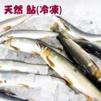 四万十川天然 鮎 (冷凍) Sサイズ 10匹セット 1匹約70g〜90g 個包装