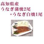 高知県産 うなぎ蒲焼2尾と白焼1尾セット  四万十 高知 冷凍 国産 無添加 ウナギ 鰻
