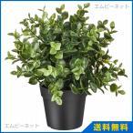 IKEA イケア 人工観葉植物 オレガノ 9cm フェイカ FEJKAの写真