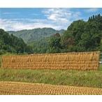 もっちり甘いお米代表 天日干しコシヒカリ  愛知県産 玄米5kg