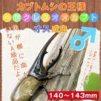 ヘラクレスオオカブト成虫 オス大型の140mm〜143mm