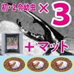 ヘラクレスオオカブト(ヘラクレスヘラクレス)初・2令幼虫3頭+超高カロリーカブトムシマットのセット