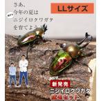 ニジイロクワガタ成虫 ペア LLサイズ 外国産 クワガタ 昆虫