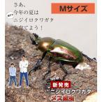 ニジイロクワガタ成虫 メス Mサイズ 外国産 クワガタ 昆虫