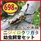 新発売 届いたその日から世界一美しいニジイロクワガタの飼育・観察が楽しめます〜 「 ニジイロクワガタ幼虫飼育セット」プレゼントに・・ご注文はお早めに