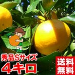 三ケ日みかん(早生) 秀品Sサイズ 5kg