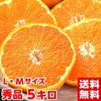 スーパーマルチ三ケ日みかん 秀品5kg