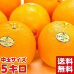 カリフォルニア産ネーブルオレンジ5kg