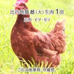 比内地鶏 大型 1羽 生肉(正肉 約1.2kg・もつ 約170g・ガラ 約600g) 秋田県大仙市産 むね/もも/ささみ/せせり/手羽/皮/ぼんじり/ハツ/レバー/砂肝/ガラ 送料無料