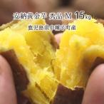 安納黄金芋 秀品 M 15kg 種子島 鹿児島県中種子町産 1ヶ月以上貯蔵熟成 安納芋 蜜芋 11月上旬〜3月下旬 送料無料