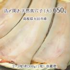 活〆・開き 天然真穴子 (生・冷蔵) 大サイズ 650g (2〜3尾) 島根県山陰沖産 送料無料