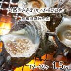 島根県隠岐の島産 素潜り漁天然活サザエ 1kg MLサイズ:指定なし (9〜12個) 【送料込み】