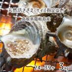 島根県隠岐の島産 素潜り漁天然活サザエ 2kg MLサイズ:指定なし (18〜24個) 【送料込み】
