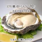 岩牡蠣(生食可) Mサイズ 8個 島根県隠岐の島産 (1個当たり重量:251〜300g、殻長:約12〜15cm) 4月下旬〜6月中旬 カキナイフ付 送料無料