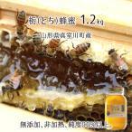 とち(純度90%以上) 国産純粋蜂蜜 無添加・非加熱・100%天然 (糖度:80度、濾過:蜜こし1回・布こし1回) 山形県真室川産 2016年採蜜 1200g瓶 送料無料