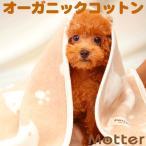 犬用ブランケット(クマ柄)Sサイズ