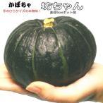 ミニかぼちゃ 坊ちゃん 9cmポット苗 カボチャ