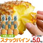 スナックパイン(パイナップル) 送料無料 5.0kgサイズ(4〜8個)  沖縄産 ギフト