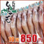 nagahara-shopping_shishamo1