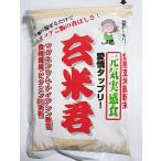 玄米全粒粉 玄米君 500gx2袋セット (焙煎の香り高いそのまま食べれる玄米粉)