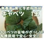 キャベツ 1個 『無農薬・無化学肥料栽培』 千葉県成田市おかげさま農場産
