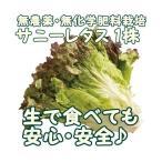 サニーレタス 1袋  『無農薬・無化学肥料栽培』 千葉県成田市おかげさま農場産 有機 サニーレタス