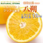 はっさく 10キロ 和歌山県産 Lサイズ 八朔 お取り寄せフルーツ
