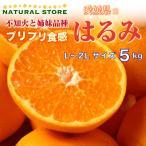【予約】2月中下旬頃より発送 はるみ 5kg箱 はるみみかん 柑橘 高糖度 愛媛県産ほか 最上級品! 贈答用 ギフトにおすすめです。