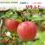 ふじ 14玉〜16玉(大玉) 5キロ箱 りんご 青森県産 早生ふじ