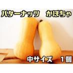 バターナッツ かぼちゃ 1個   『無農薬・無化学肥料栽培』 埼玉県加須市 遠藤農園産