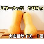 バターナッツ かぼちゃ 大き目サイズ 1個   『無農薬・無化学肥料栽培』 埼玉県加須市 遠藤農園産