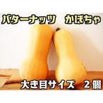 バターナッツ かぼちゃ 大き目サイズ 2個   『無農薬・無化学肥料栽培』 埼玉県加須市 遠藤農園産