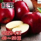 紅玉 40玉から50玉 10キロ箱 りんご 山形県産 こうぎょく 山形 りんご アップルパイに最適