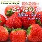 【要冷蔵】 いちご さがほのか  2パック化粧箱 2L中サイズ 約350g×2パック  苺 佐賀県産 熊本県産 お取り寄せ