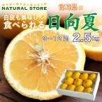 種なし 日向夏 化生箱 9玉から12玉 約2.5キロ 産 お取り寄せフルーツ 宮崎県綾町産 ひゅうがなつ