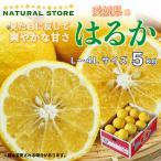 はるか 5キロ 正箱 愛媛県産 お取り寄せフルーツ 柑橘 愛媛県のブランド柑橘