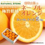 ネーブルオレンジ 5キロ 正箱 3L 4Lサイズ 大玉サイズ 和歌山県産 お取り寄せフルーツ 柑橘 極旨柑橘 オレンジ おれんじ